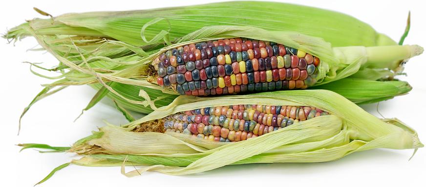 Verre Gem Corn