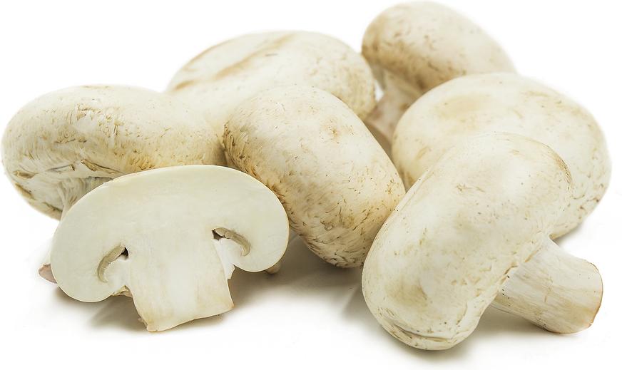 Hvide store svampe
