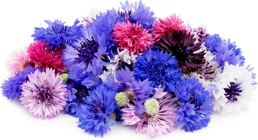 Fleurs de bouton de baccalauréat